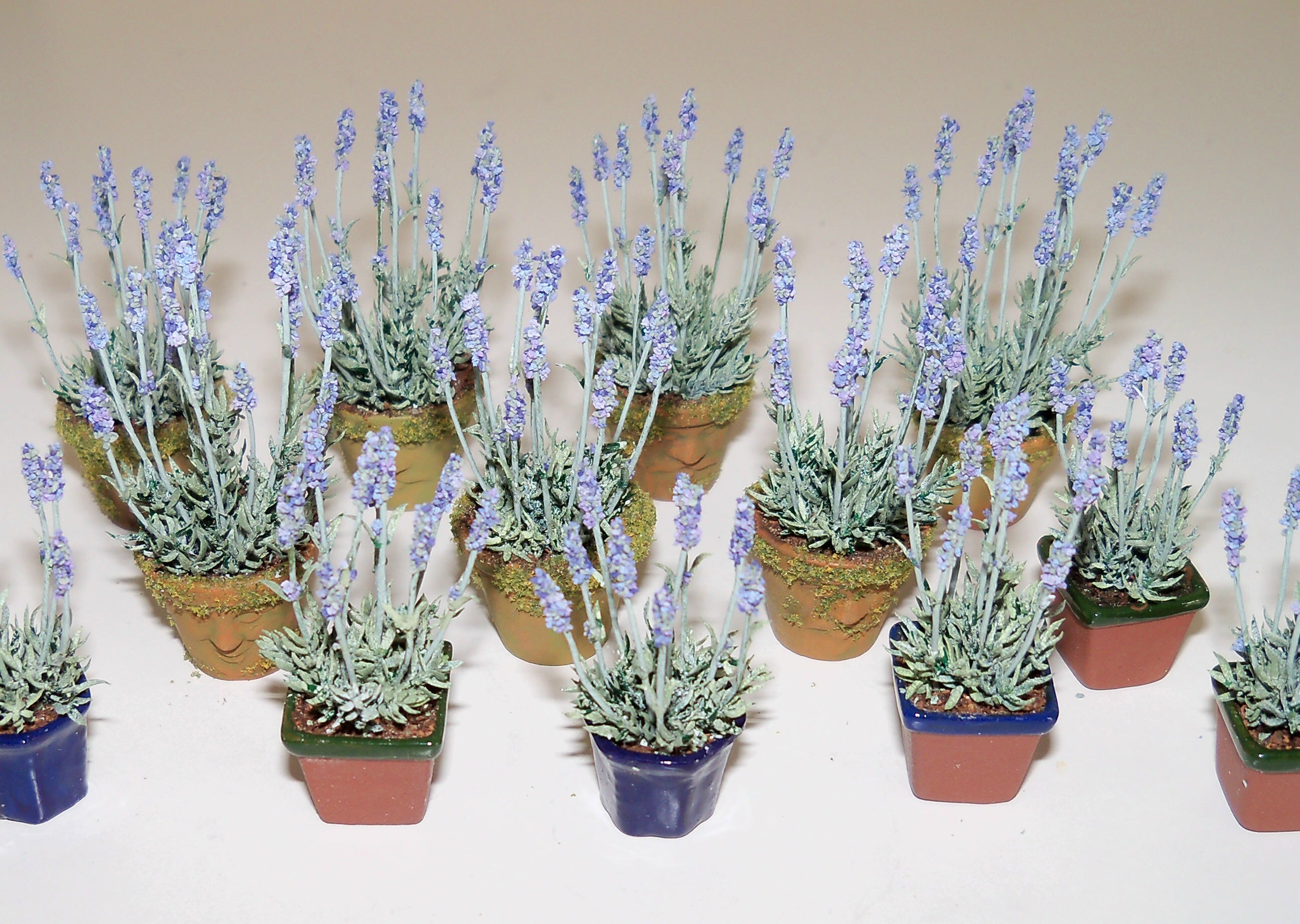 Lavender plants in assorted pots