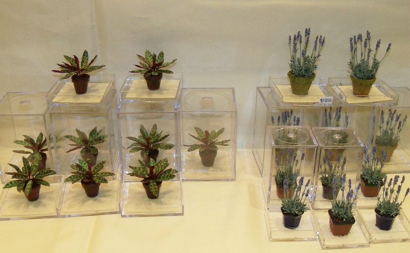 New plants for 2014